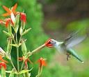 Create Wildlife-Friendly Spaces With Habitat Network