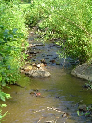 Brook Trout Restoration and Expansion