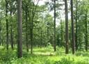 Interior Highland Shortleaf Pine Initiative