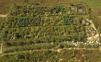 Restoring Coal-Mined Lands to Create Habitat for Imperiled Birds
