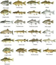 Alabama Statewide Fish IBI