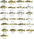 Alabama Statewide Fish IBI