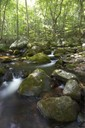 Upstream view of stream at the Clinch Mountain Wildlife Management Area.