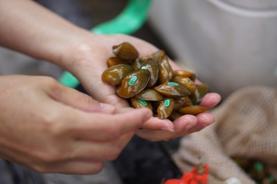 USFWS: Endangered mussels bound for the Powell River