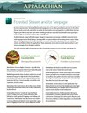Fact Sheet: Habitat - Forested Stream and/or Seepage