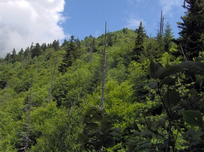 Mixed spruce-fir and northern hardwood forest