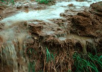 Runoff of soil & fertilizer.jpg