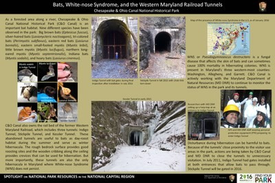 Bats, White-nose Syndrome, and the Western Maryland Railroad Tunnels