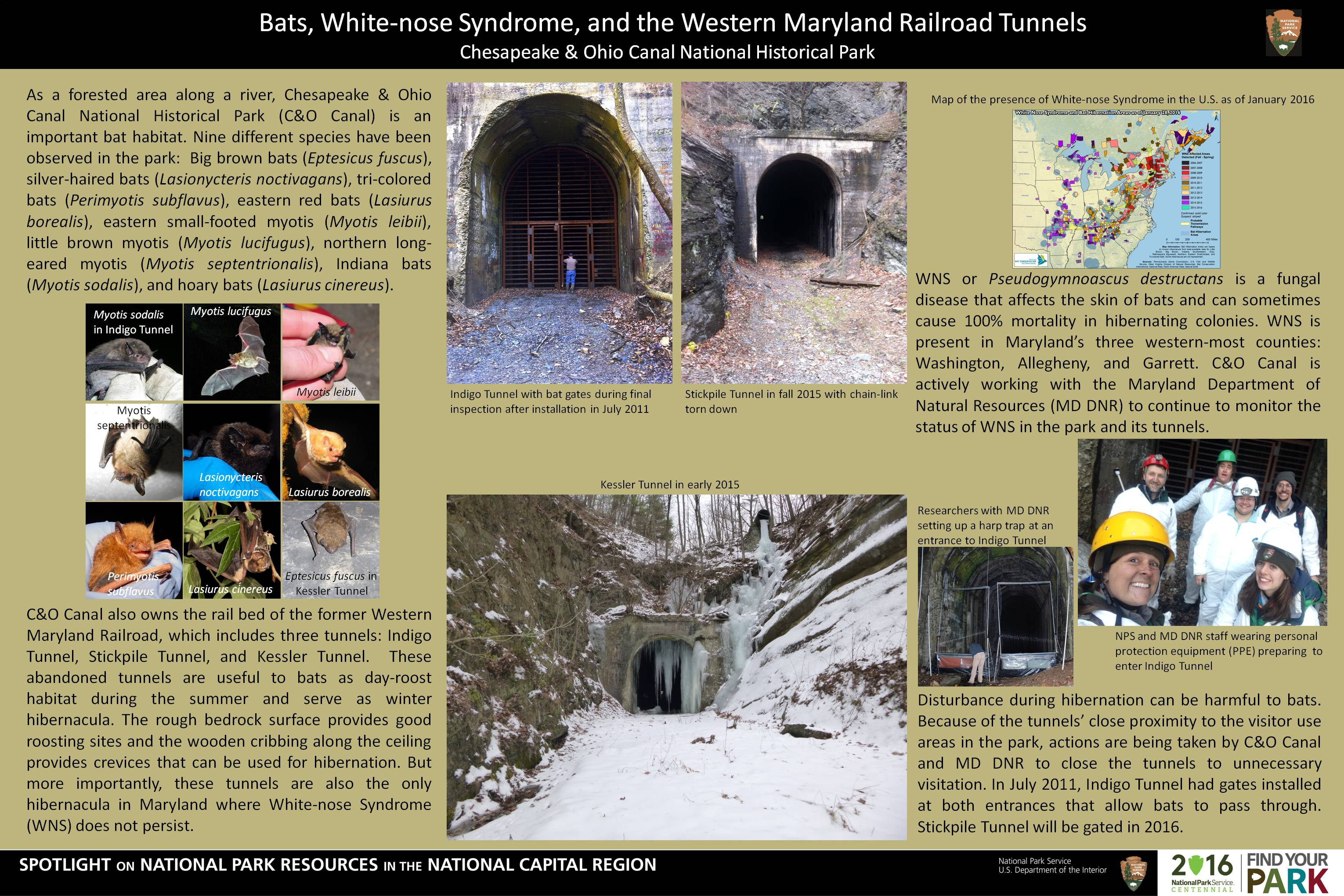Bats Whitenose Syndrome and the Western Maryland Railroad