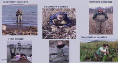 Sediment and Vegetation trends at Dyke Marsh Preserve and Kenilworth Aquatic Gardens