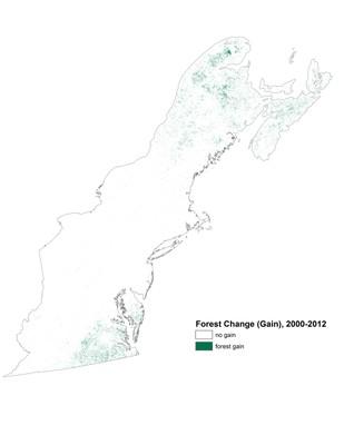 Forest Change Gain, 2000-2012, Northeast