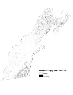 Forest Change, Loss 2000-2012, Northeast