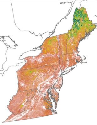Landscape Capability for American Woodcock, Version 2.0, Northeast