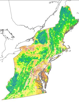 Landscape Capability for Black Bear, Version 2.0, Northeast