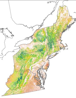 Landscape Capability for Ovenbird, Version 2.0, Northeast