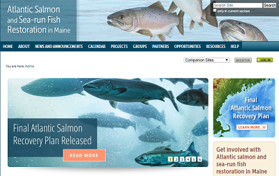Atlantic Salmon Sea-run Fish Restoration in Maine