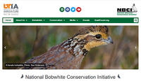 National Bobwhite Conservation Initiative