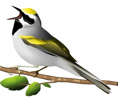 Thinning Forests to Save the Birds