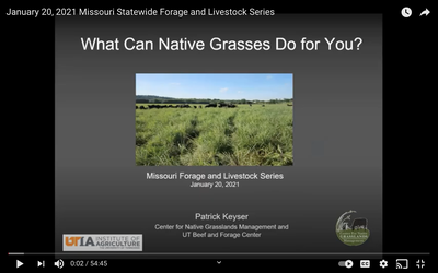 Planting Native Grasses: Missouri Forage and Livestock Series