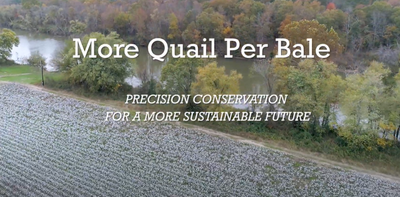 More Quail Per Bale: Precision Conservation for a More Sustainable Future