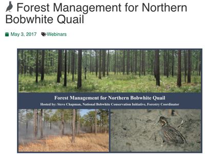 Forest Management for Northern Bobwhite Quail