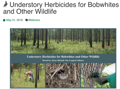 Understory Herbicides for Bobwhites and Other Wildlife