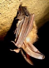 Bat Advisory Workspace