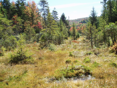 Acquiring Information on the Climate Vulnerability of Appalachian Species and Habitats