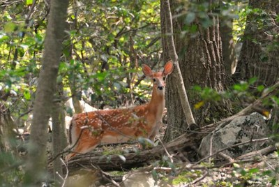 Appalachian Wildlife Center - Partnering for Wildlife and People in an Economically-Depressed Region