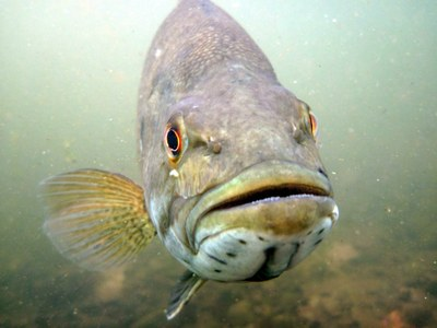 In Hot Water: Climate Change is Affecting North American Fish