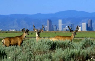 Urban Wildlife Initiative Engages Communities