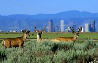 Urban Wildlife Initiative Engages Communities