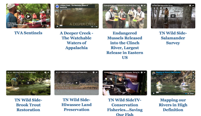 Videos Around the Basin