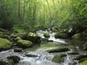Webinar on Riparian Restoration Tool showcases Appalachian LCC Science
