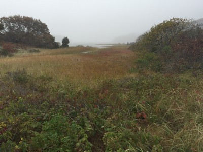 Identifying Resilient Sites for Coastal Conservation