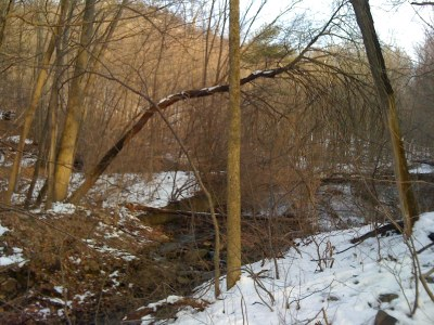 Dam Removals to Reconnect Brook Trout Habitat on an Unnamed Tributary to Frankstown Branch, PA