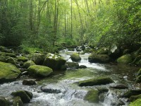 Removal of Illegally Introduced and Missed Rainbow Trout from Lynn Camp Prong, Great Smoky Mountain National Park, Tennessee