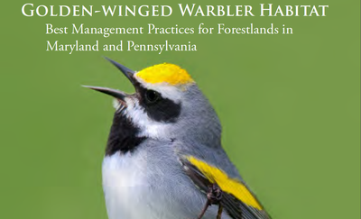 Forestlands Best Management Practices for Golden-winged Warblers