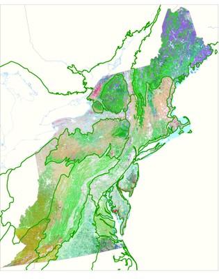 Virginia Piedmont and Coastal Plain Updates to Northeast Habitat Map