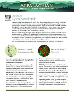 CCVA Fact Sheet: Open Woodlands