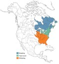 Distribution of the American Black Duck. This species breeds locally South to the dashed line.