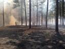 Prescribed burns used to manage habitat for bobwhite, gopher tortoise.