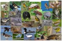 Landscape Capability for Representative Species