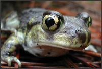 Vernal Pool Mapper and Database