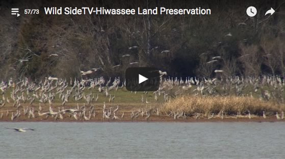 Landscape Partnership